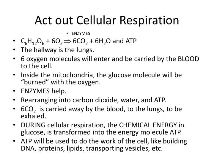 Act out Cellular Respiration