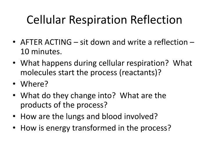 Cellular Respiration Reflection
