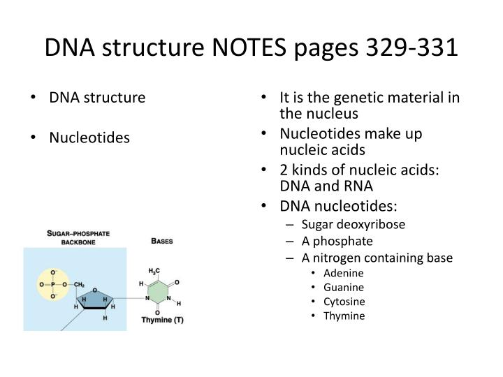 DNA structure NOTES pages 329-331