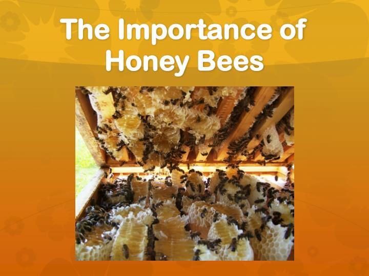 the importance of bees Why are bees so important like all species, the humble bumble bee plays a pivotal role in the health of our environment and the ecosystems within it.