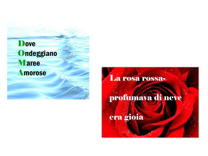 La rosa rossa-