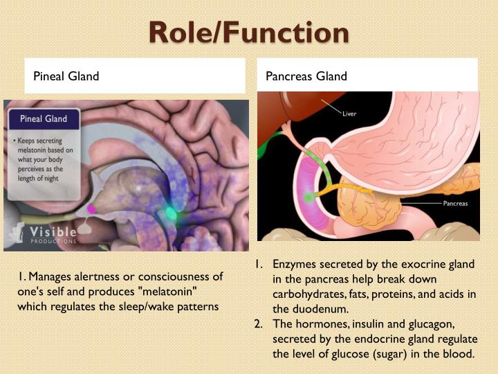 pineal gland research papers Abstract calcification of the pineal gland is shown to be closely related to defective sense of direction in a tricentre prospective study of 750 patients lateral skull radiographs showed that 394 had calcified pineal glands.
