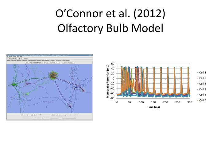 O connor et al 2012 olfactory bulb model