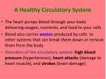 a healthy circulatory system