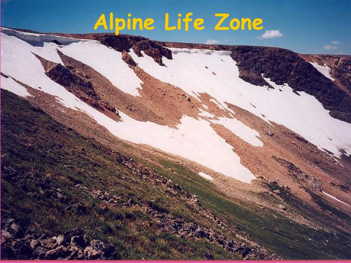 Alpine Life Zone