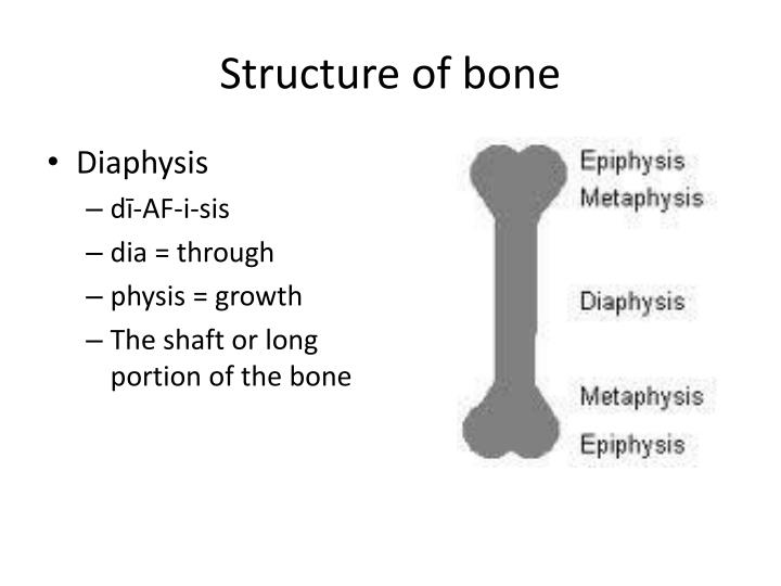 Structure of bone