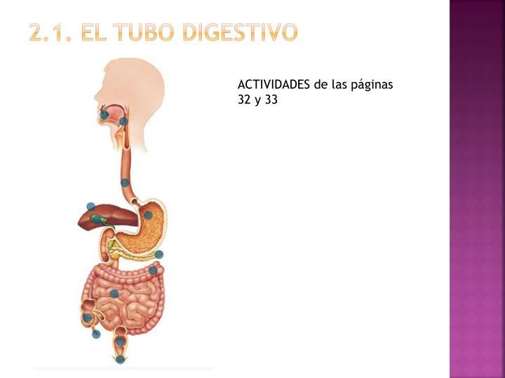 2.1. el tubo digestivo