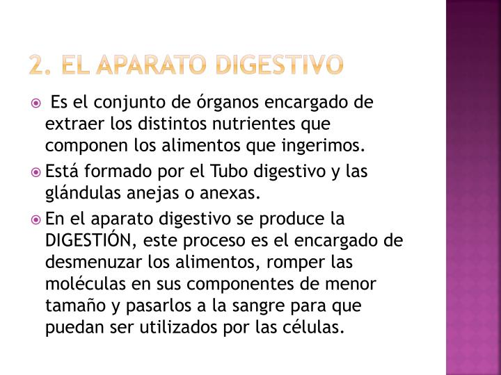 2. El aparato digestivo