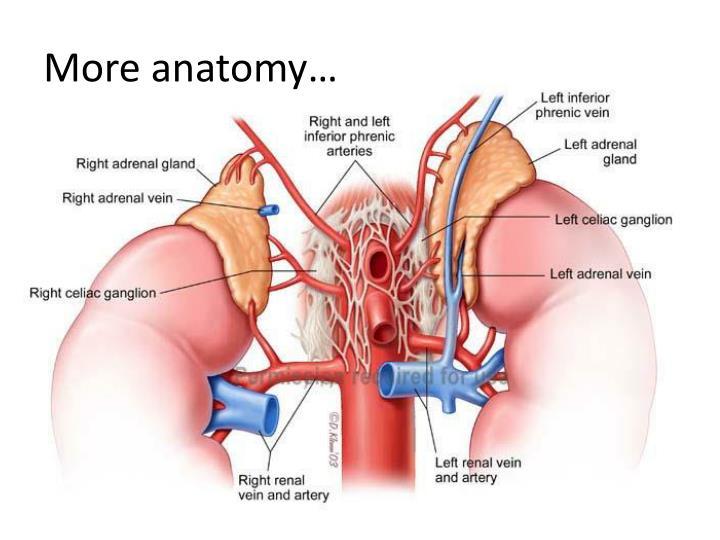 PPT - Adrenal Disease PowerPoint Presentation - ID:1930829