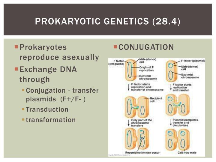 Prokaryotic genetics (28.4)