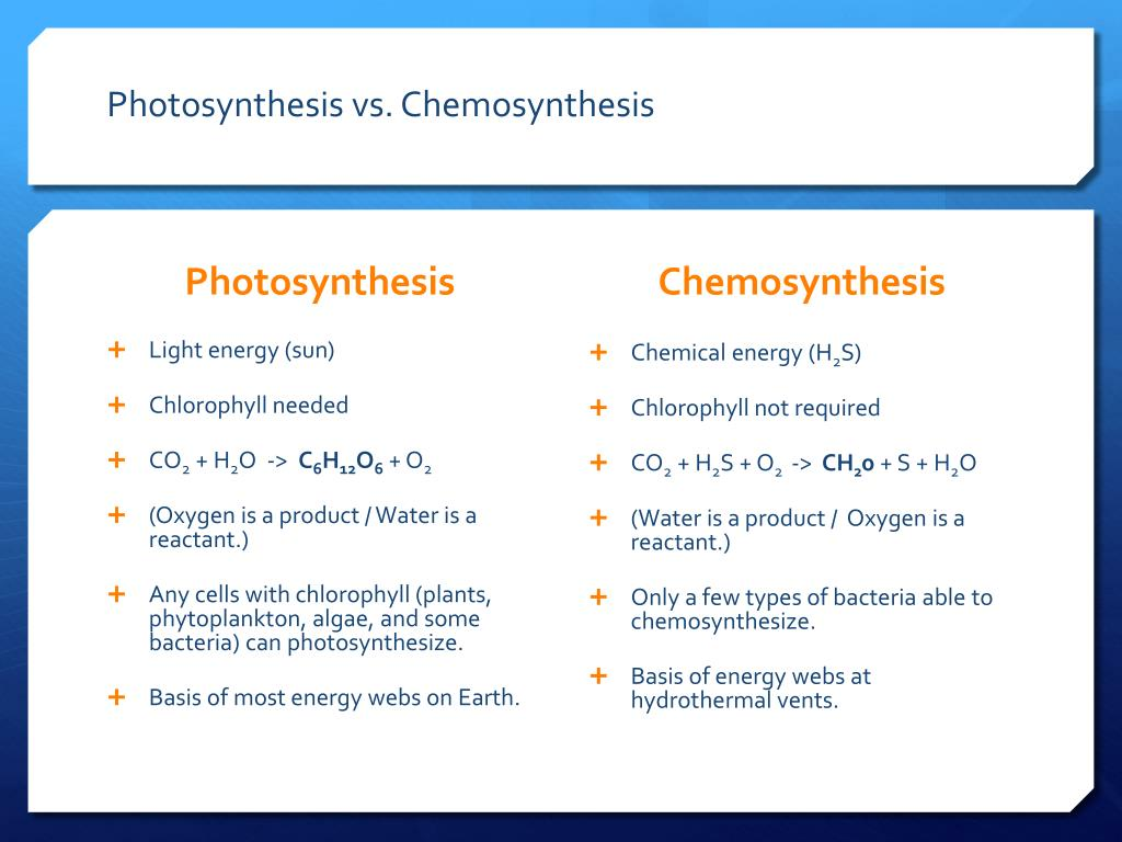 which plants produce their food by chemosynthesis