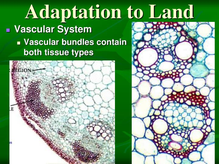 Adaptation to Land