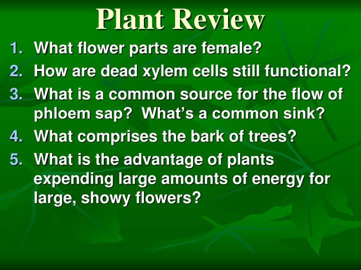 Plant Review