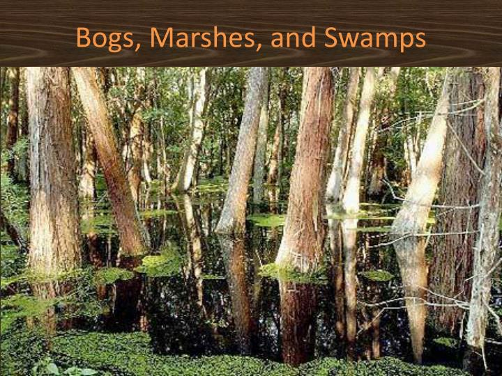 Bogs, Marshes, and Swamps