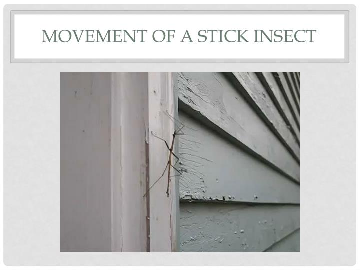 Movement of a stick insect2