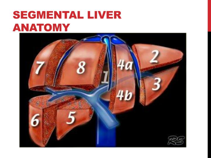 PPT - Imaging Anatomy of the Liver PowerPoint Presentation - ID:1932425