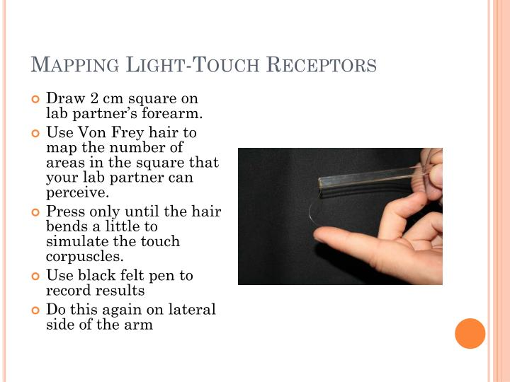 Mapping Light-Touch Receptors