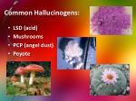 common hallucinogens
