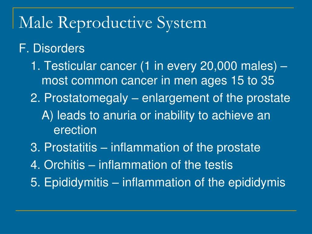 Ppt Male Reproductive System Powerpoint Presentation Free Download Id 1933740
