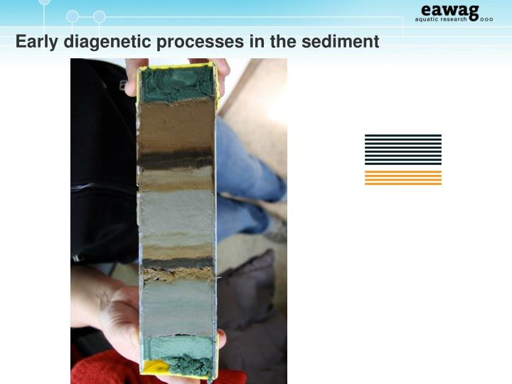 Early diagenetic processes in the sediment
