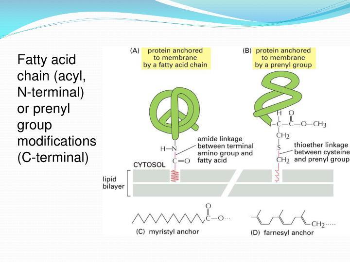Fatty acid chain (