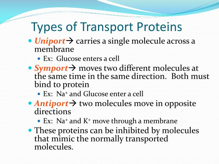 Types of Transport Proteins
