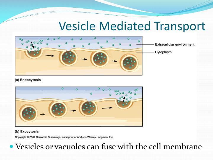 Vesicle Mediated Transport