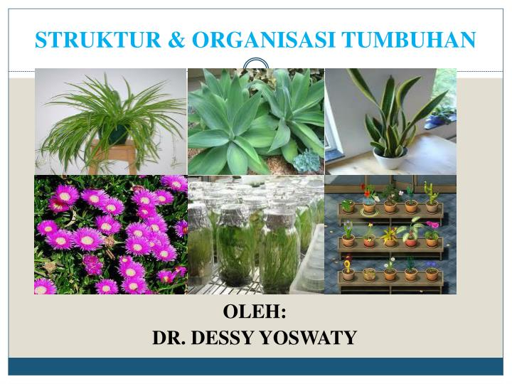 Struktur organisasi tumbuhan