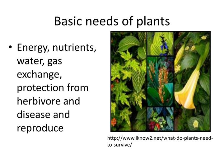 Ppt Unit 2 Plants Anatomy Growth And Function Powerpoint