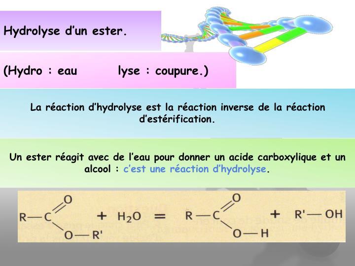 Hydrolyse d'un ester.