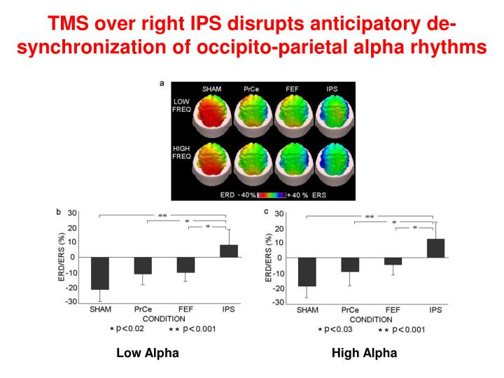 TMS over right IPS disrupts anticipatory de-synchronization of