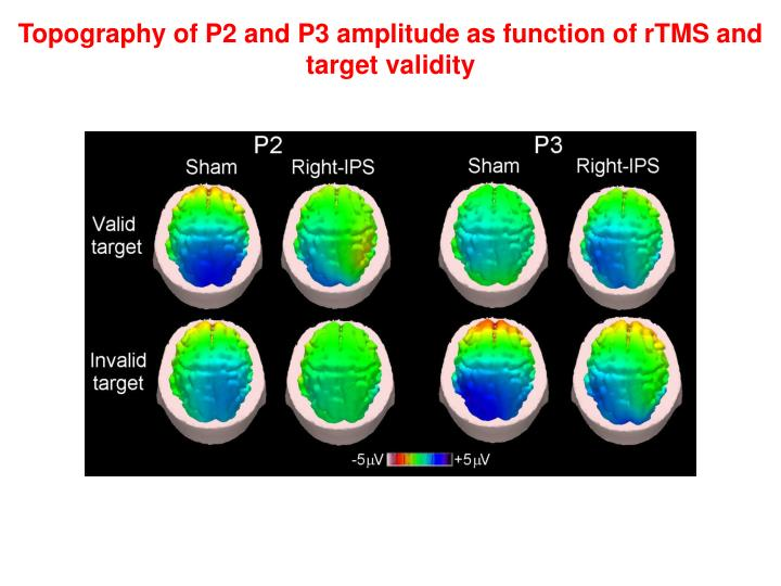 Topography of P2 and P3 amplitude as function of rTMS and target validity