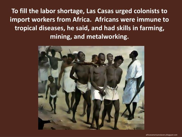 To fill the labor shortage, Las Casas urged colonists to import workers from Africa.  Africans were immune to tropical diseases, he said, and had skills in farming, mining, and metalworking.