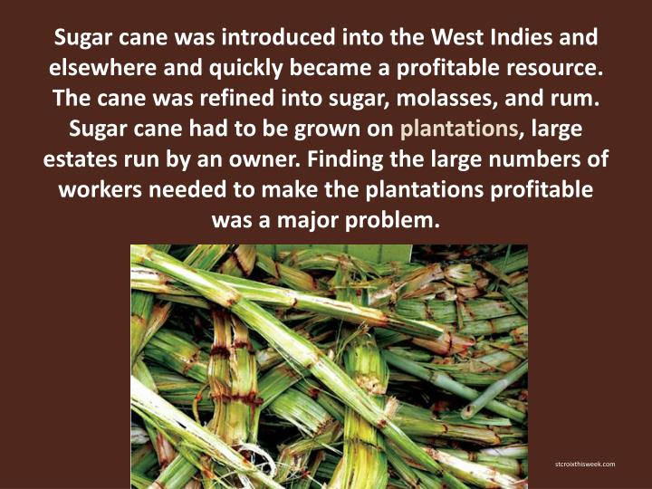 Sugar cane was introduced into the West Indies and elsewhere and quickly became a profitable resource. The cane was refined into sugar, molasses, and rum. Sugar cane had to be grown on