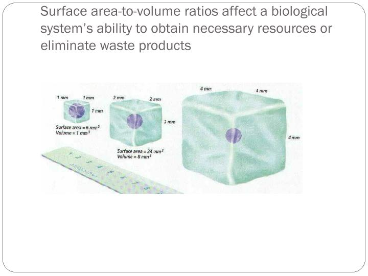 Surface area-to-volume ratios affect a biological system's ability to obtain necessary resources or eliminate waste products