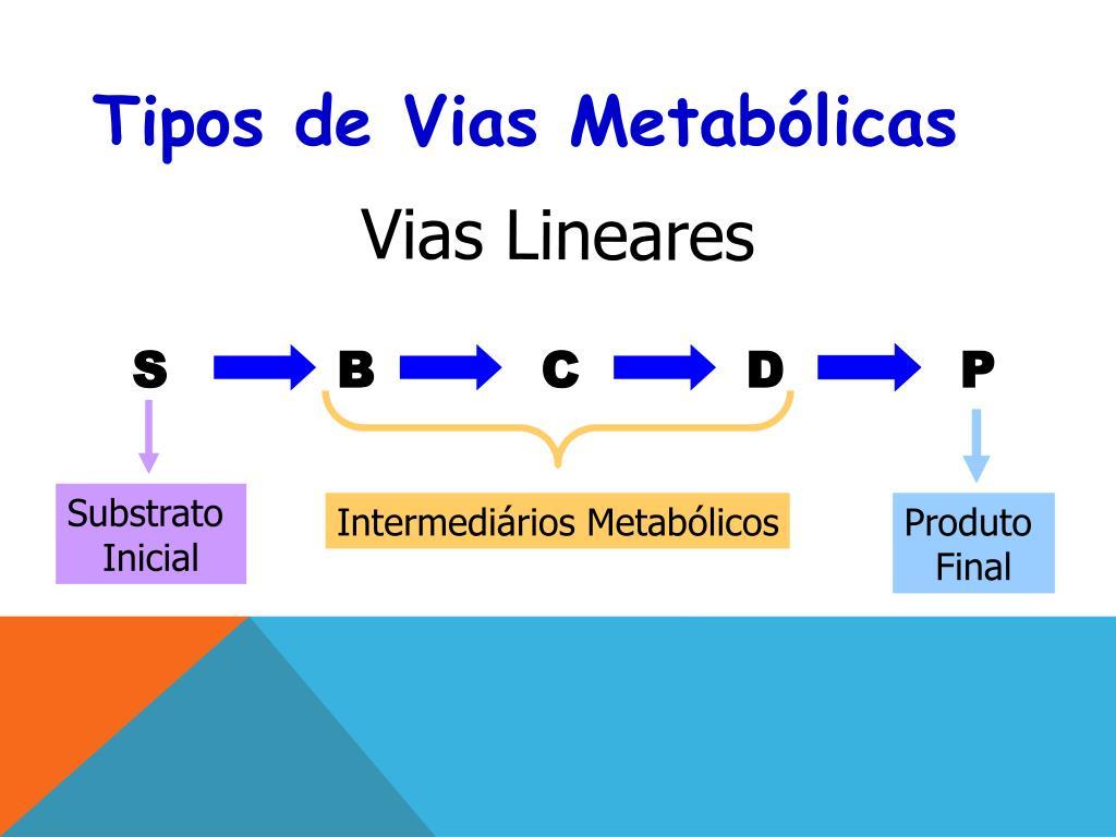 PPT - INTRODUÇÃO AO METABOLISMO PowerPoint Presentation..