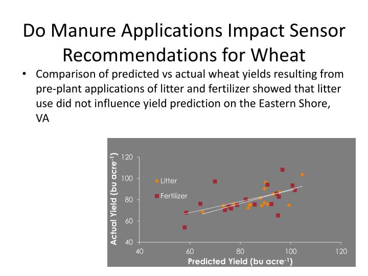 Do Manure Applications Impact Sensor Recommendations for Wheat