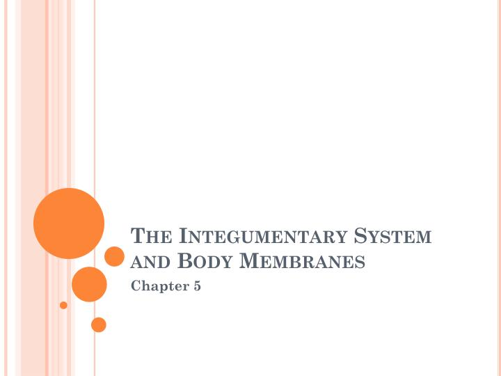the integumentary system and body membranes n.
