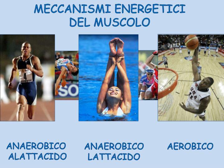MECCANISMI ENERGETICI