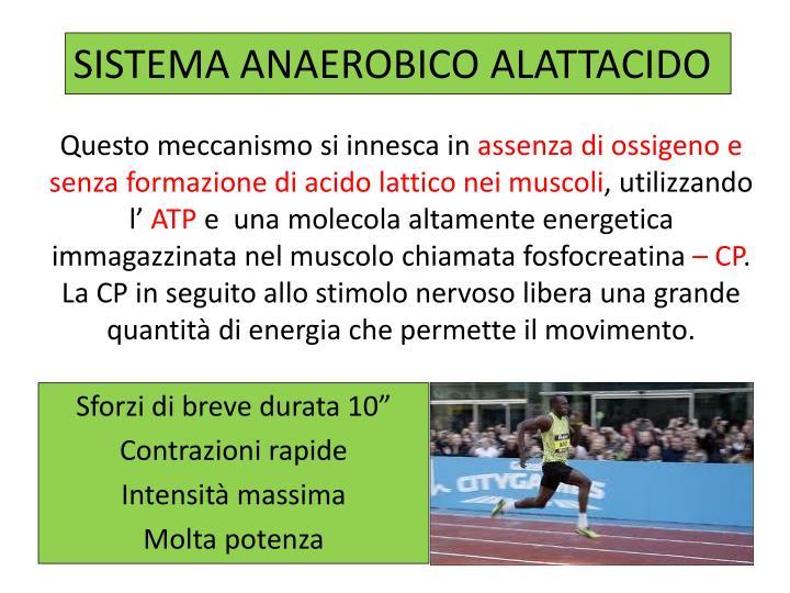 SISTEMA ANAEROBICO ALATTACIDO