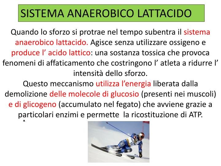 SISTEMA ANAEROBICO LATTACIDO