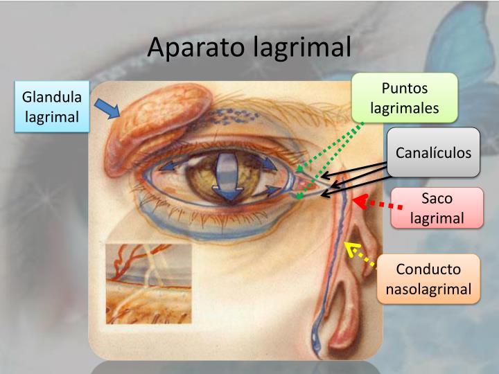 PPT - ENFERMEDADES DEL APARATO LAGRIMAL PowerPoint Presentation - ID ...