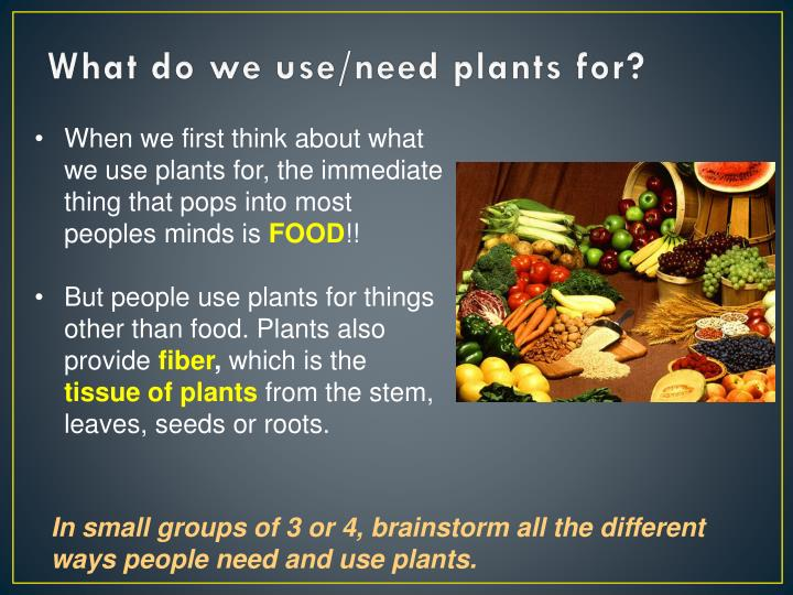 What Do We Use Need Plants For