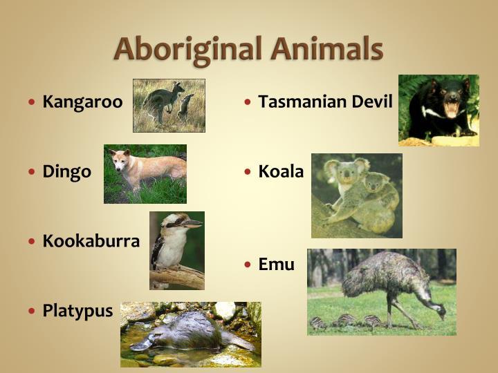 Aboriginal Animals