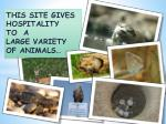 this site gives hospitality to a large variety of animals