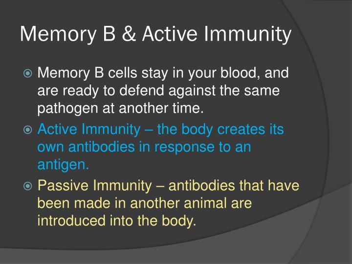 Memory B & Active Immunity