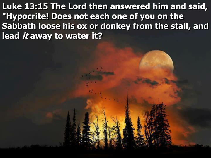 """Luke 13:15 The Lord then answered him and said, """"Hypocrite! Does not each one of you on the Sabbath loose his ox or donkey from the stall, and lead"""