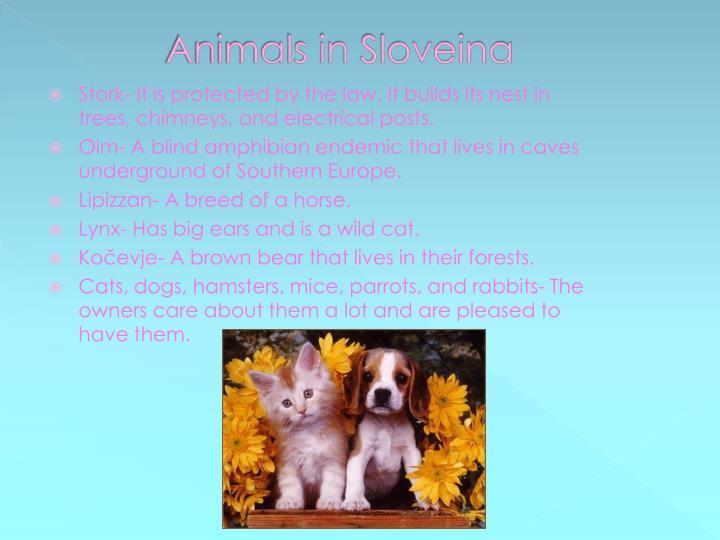 Animals in s loveina