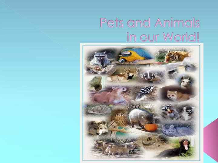 Pets and animals in our world