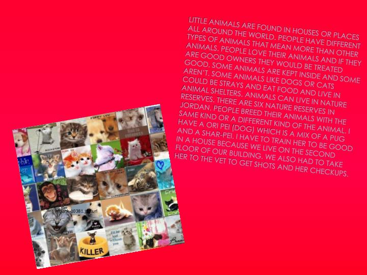 Little animals are found in houses or places all around the world. People have different types of an...